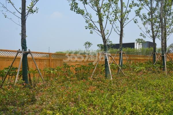 瑞安翠湖山实景图(8.24)